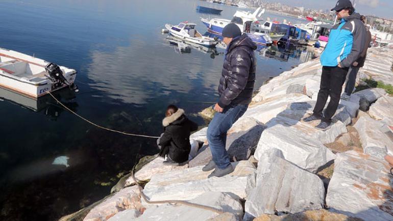 İstanbul'da sahile vurdular görenler şaştı kaldı! 4