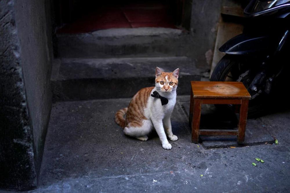Çin'de rezalet bitmiyor! 700 kedi restoranlarda satılacaktı 2