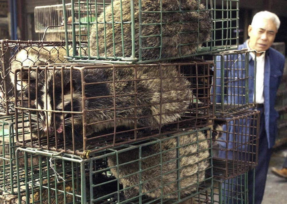Çin'de rezalet bitmiyor! 700 kedi restoranlarda satılacaktı 9