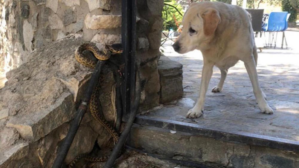 Bu uyarılara dikkat! Zehirli yılanlar gece çıkıyor, sahillerde ayakkabı giyin 25