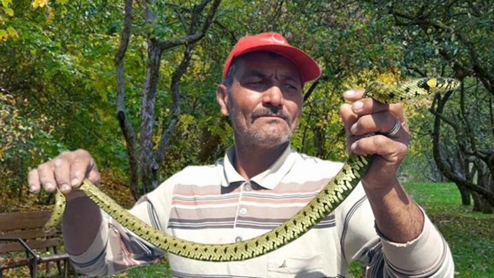Bu uyarılara dikkat! Zehirli yılanlar gece çıkıyor, sahillerde ayakkabı giyin 27