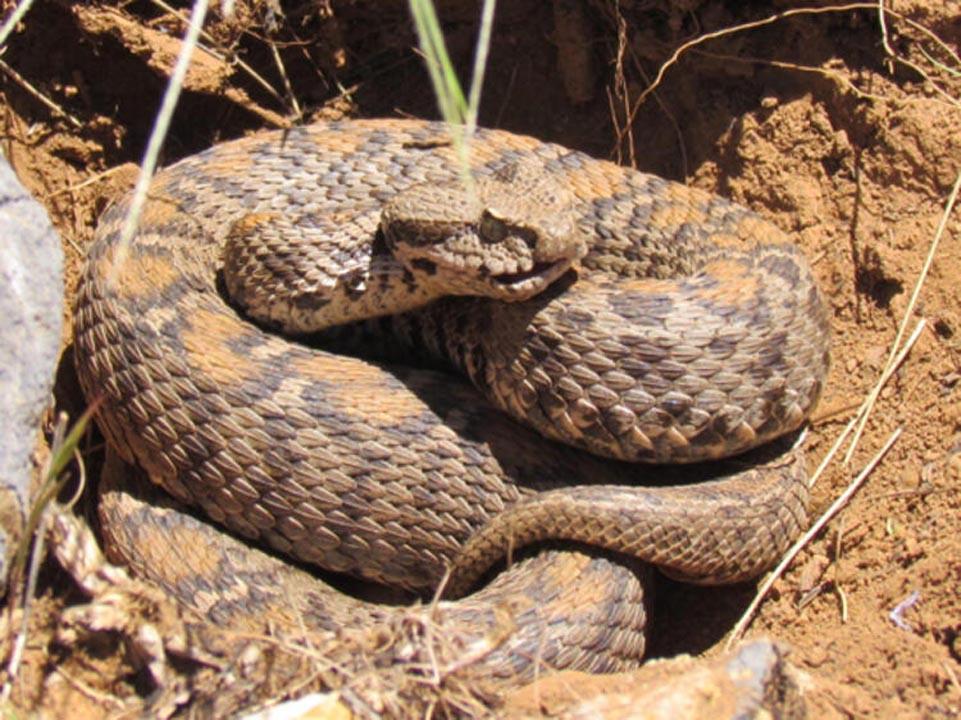 Bu uyarılara dikkat! Zehirli yılanlar gece çıkıyor, sahillerde ayakkabı giyin 4