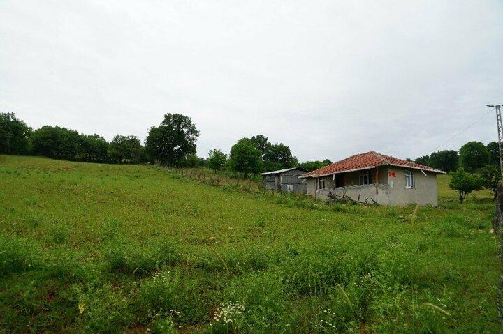 Kastamonu'da aç kalan ayı evi yağmaladı 10