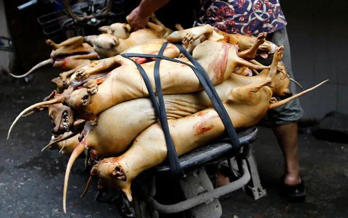 Çin'de köpek eti festivali başladı! Görüntüler kan dondurdu! 12