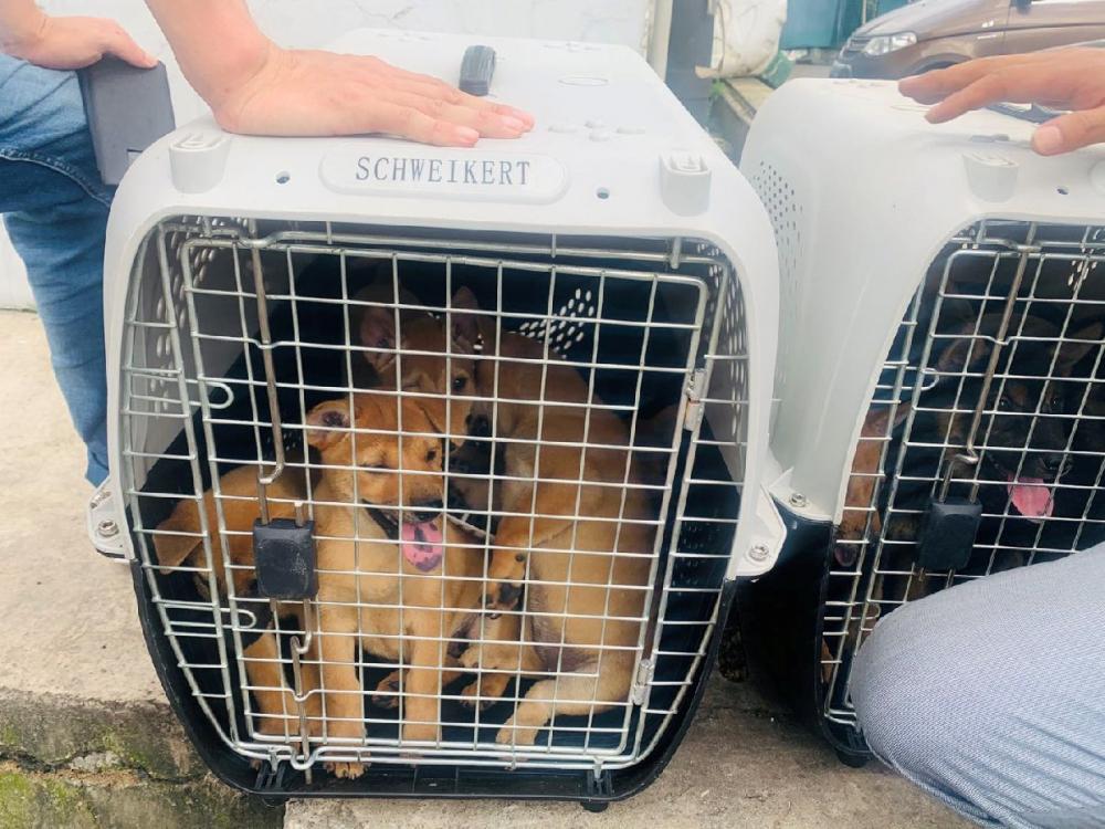 Çin'de köpek eti festivali başladı! Görüntüler kan dondurdu! 13