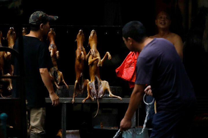 Çin'de köpek eti festivali başladı! Görüntüler kan dondurdu! 4