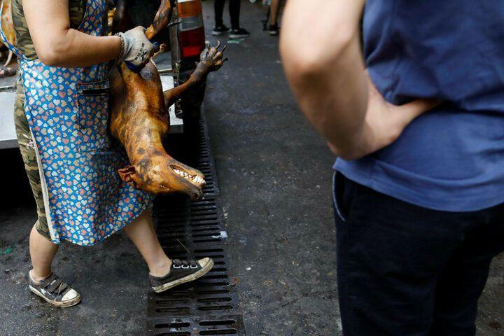 Çin'de köpek eti festivali başladı! Görüntüler kan dondurdu! 8