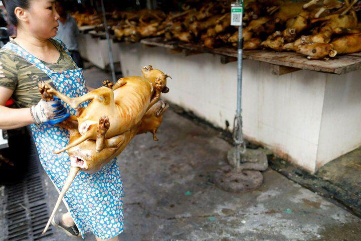 Çin'de köpek eti festivali başladı! Görüntüler kan dondurdu! 9