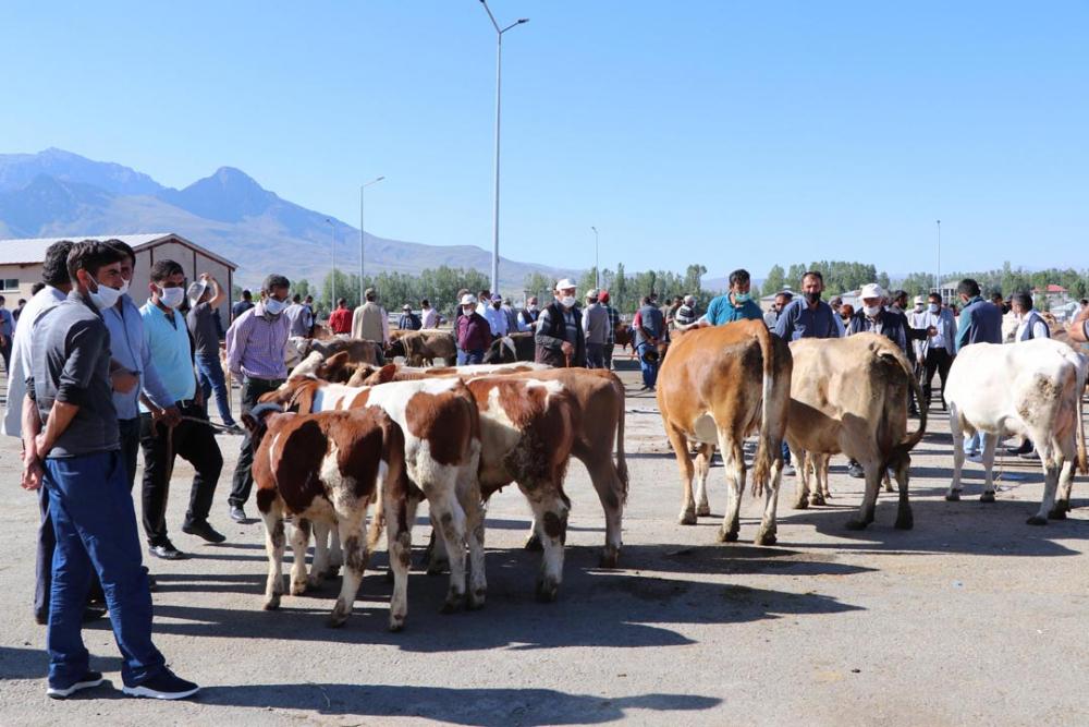 Van'da canlı hayvan pazarı yeniden açıldı! Pazarlık elle değil, sopalarla yapılıyor 6