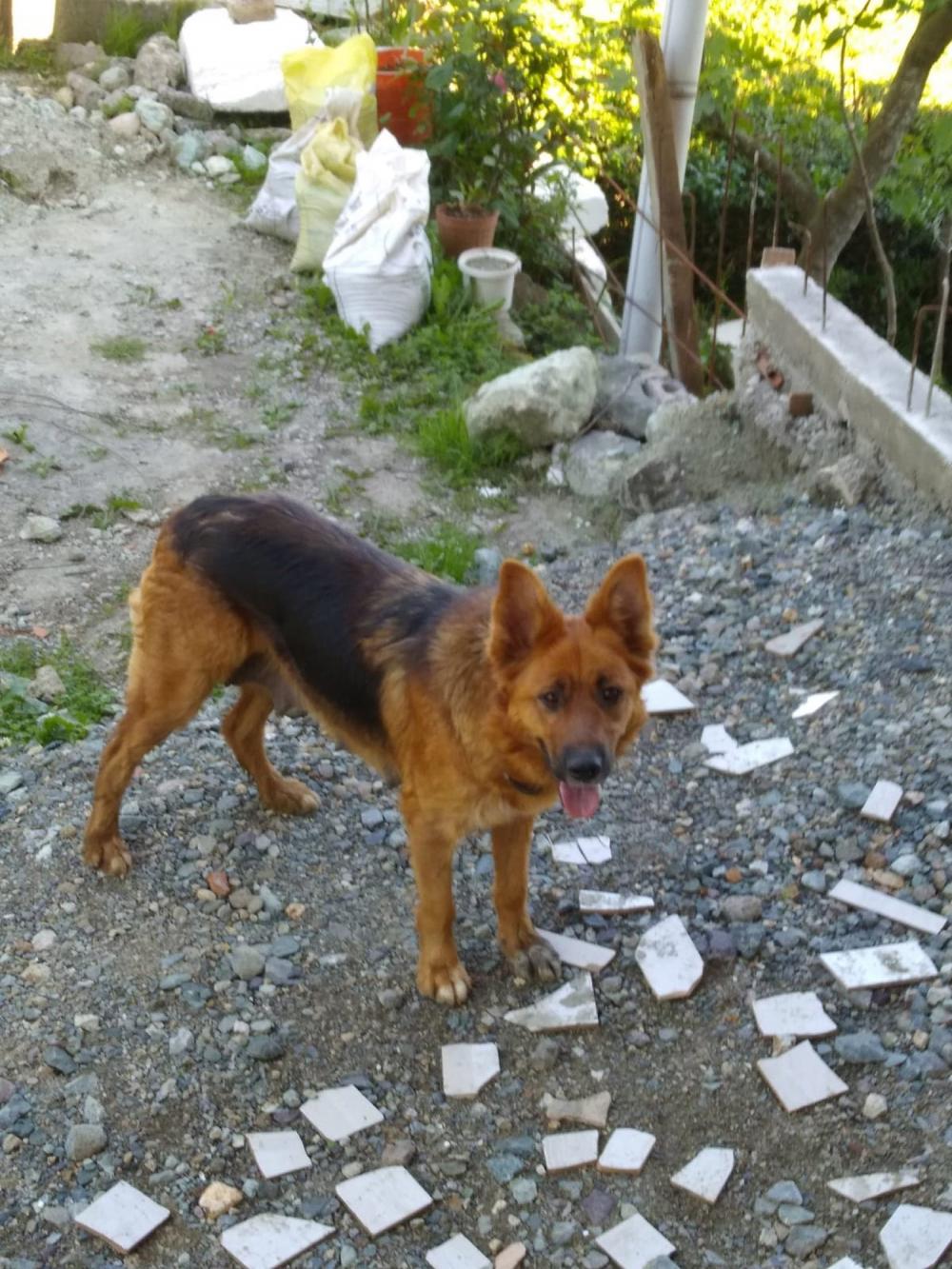 Trabzon'da 3 köpeğin saldırısına uğrayan kadının kolu kesildi! 10