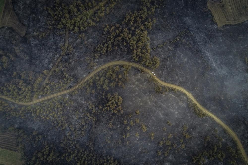 Çanakkale'deki orman yangını binlerce ağacı yok etti 11
