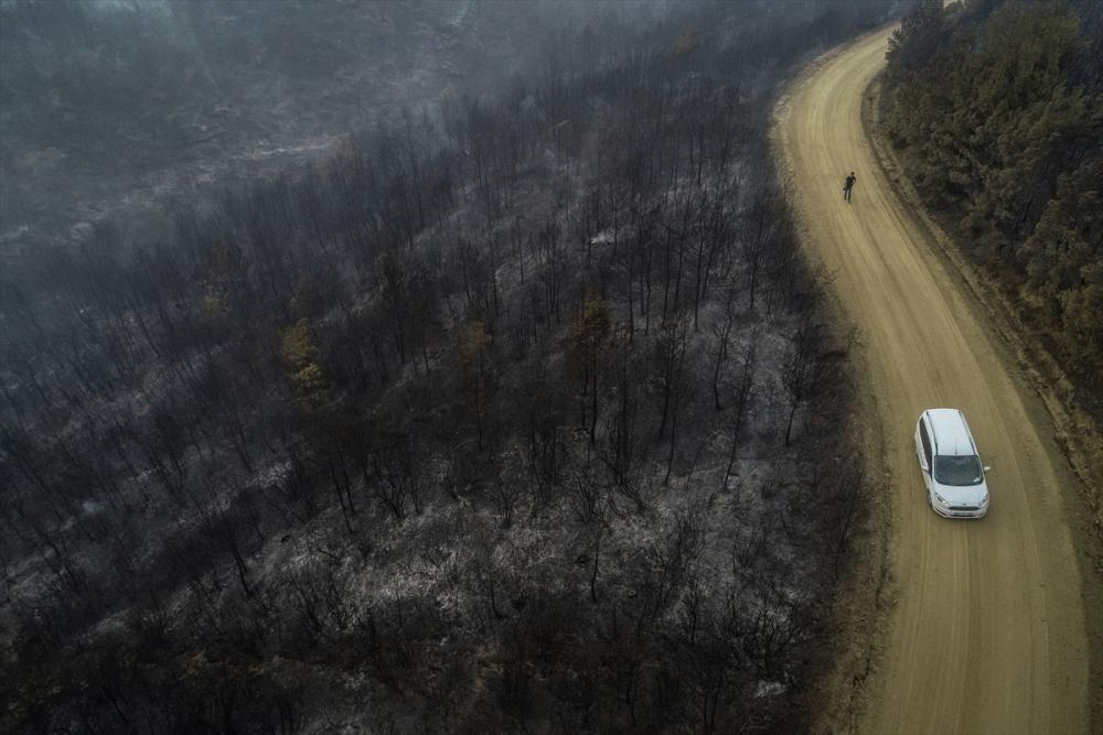Çanakkale'deki orman yangını binlerce ağacı yok etti 13