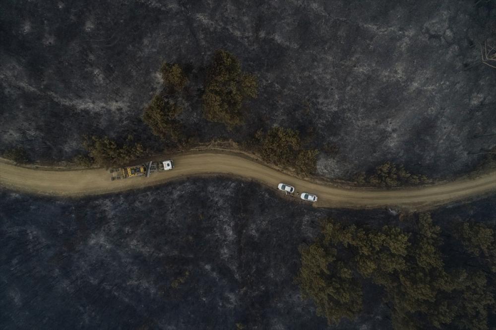 Çanakkale'deki orman yangını binlerce ağacı yok etti 15