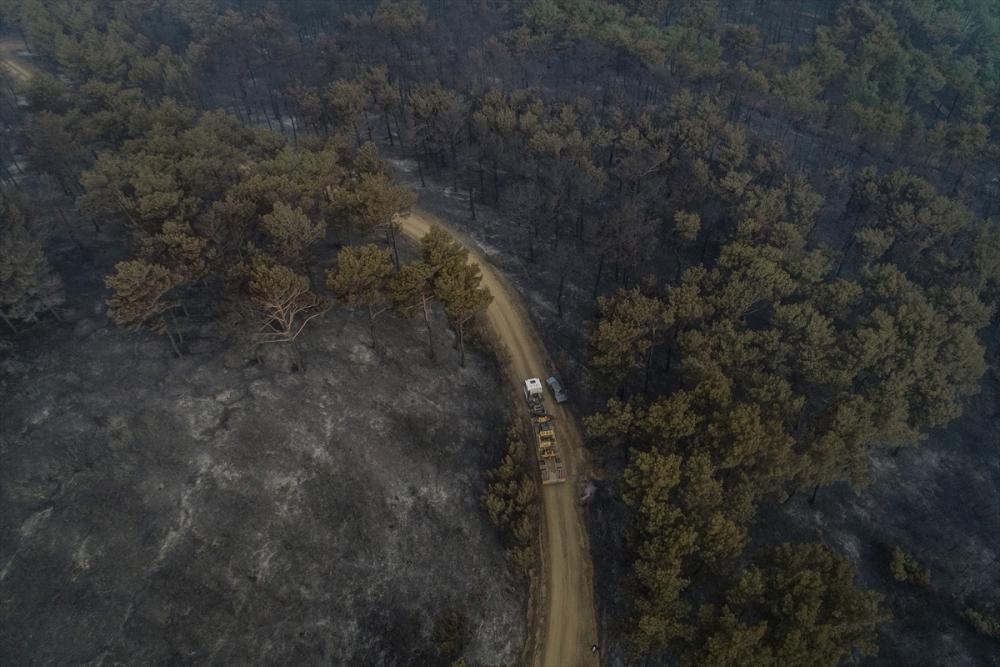 Çanakkale'deki orman yangını binlerce ağacı yok etti 16