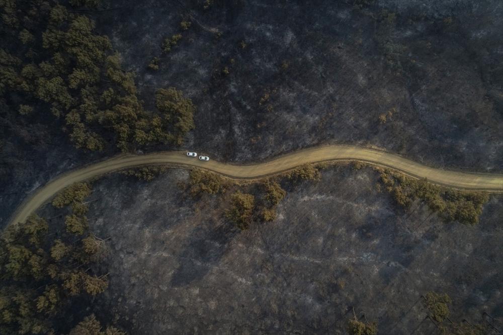 Çanakkale'deki orman yangını binlerce ağacı yok etti 21