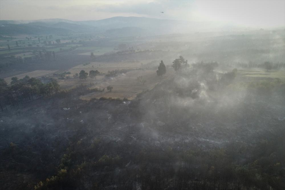 Çanakkale'deki orman yangını binlerce ağacı yok etti 22
