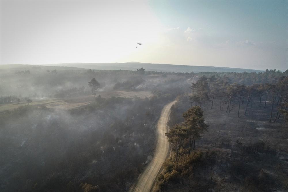Çanakkale'deki orman yangını binlerce ağacı yok etti 23