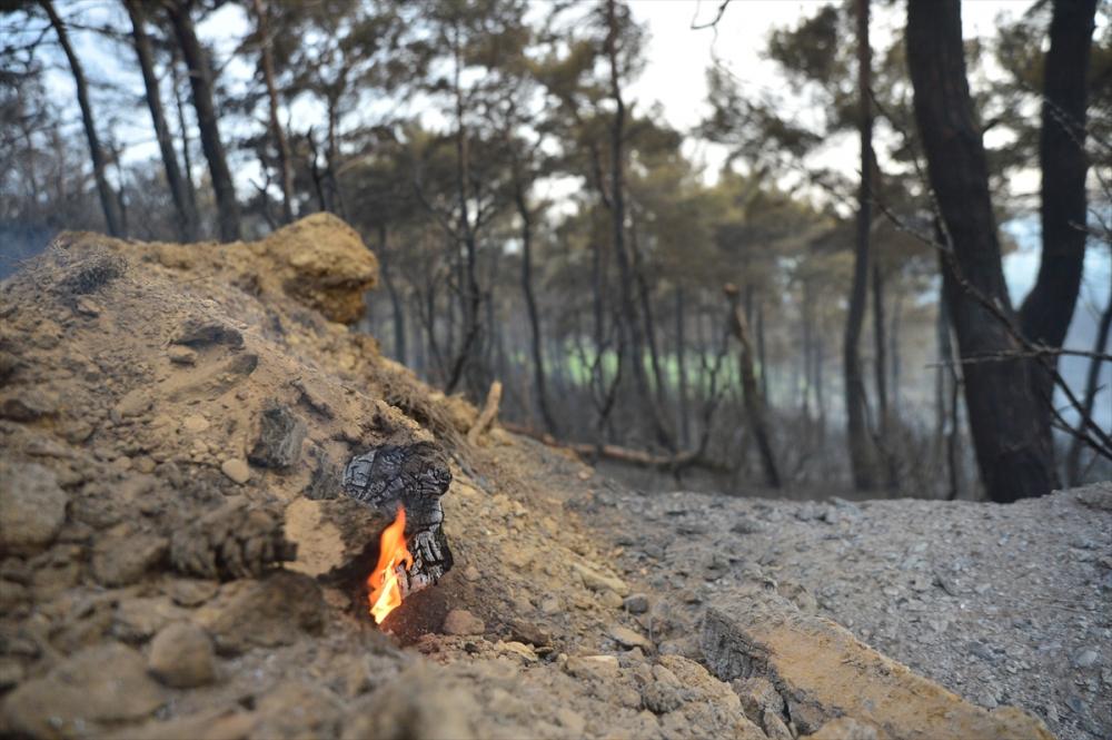 Çanakkale'deki orman yangını binlerce ağacı yok etti 3