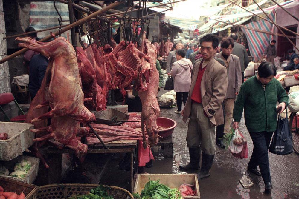 DSÖ'den acilen hayvan pazarını durdurma çağrısı! 1