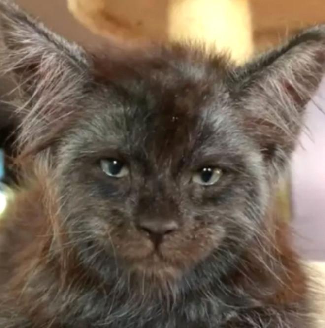Bu kediyi gören photoshop sanıyor! 1