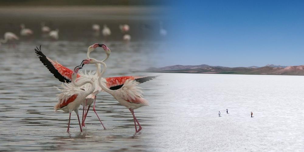 Van'daki Akgöl'ün içler acısı hali! Bir zamanlar kuşlara ev sahipliği yapıyordu, şimdi tamamen kurudu 1
