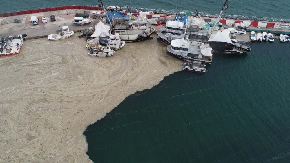 Marmara Denizi'ndeki tehlike devam ediyor: İstanbul, Kocaeli, Bursa, Tekirdağ... İşte deniz salyasının etkileri... 14