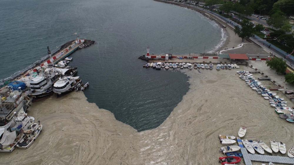 Marmara Denizi'ndeki tehlike devam ediyor: İstanbul, Kocaeli, Bursa, Tekirdağ... İşte deniz salyasının etkileri... 15
