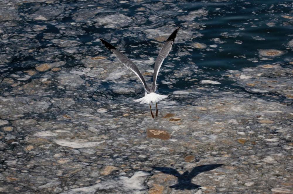 Marmara Denizi'ndeki tehlike devam ediyor: İstanbul, Kocaeli, Bursa, Tekirdağ... İşte deniz salyasının etkileri... 29