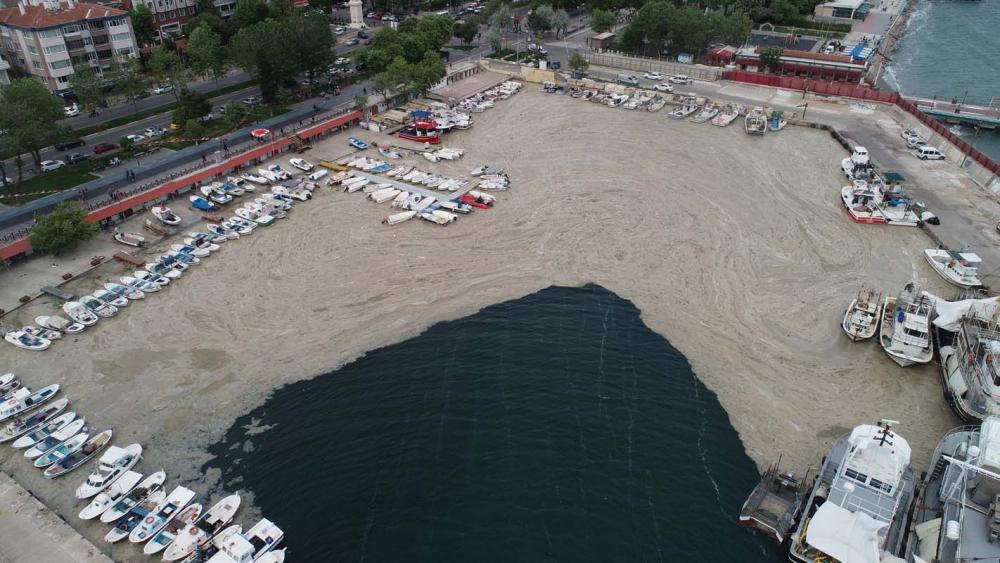 Marmara Denizi'ndeki tehlike devam ediyor: İstanbul, Kocaeli, Bursa, Tekirdağ... İşte deniz salyasının etkileri... 9