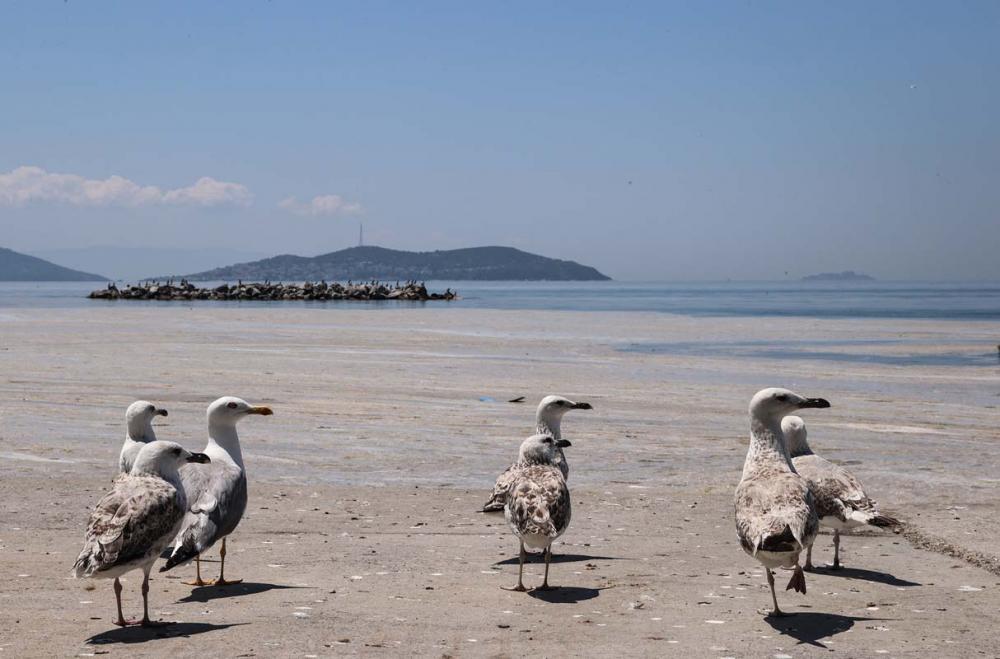Deniz salyası Marmara'yı esir aldı! Manzara görenleri ürkütüyor! 2