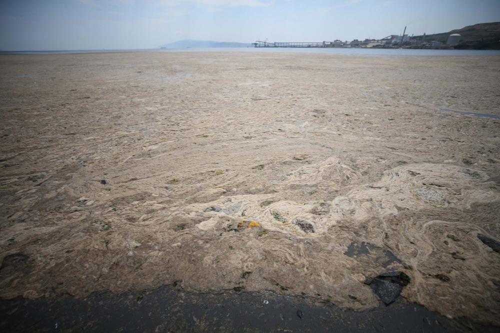 Marmara'da durum kötüleşiyor!  Müsilaj (deniz salyası) , Balıkesir Erdek'i esir aldı! 2