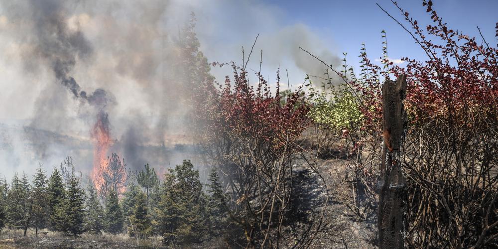 Atatürk Orman Çiftliği'nde kahreden görüntüler! Yine ciğerlerimiz yandı 1