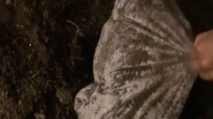 Şarkıcı Azealia Banks, ölen kedisini mezardan çıkarıp pişirdi! Şok eden görüntülere tepki gecikmedi!