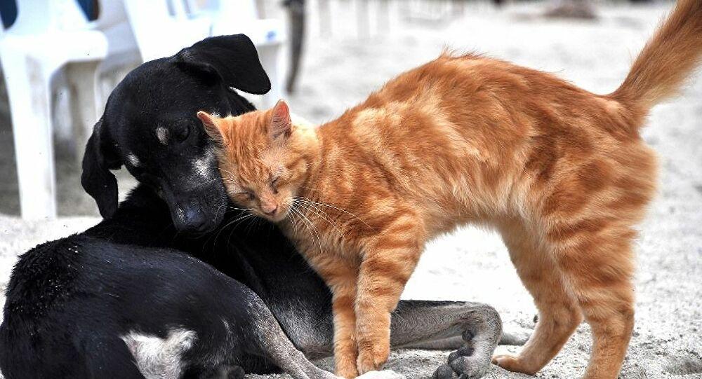 AK Parti'den hayvan hakları yasası müjdesi: Önümüzdeki haftalarda yasalaştırılacak