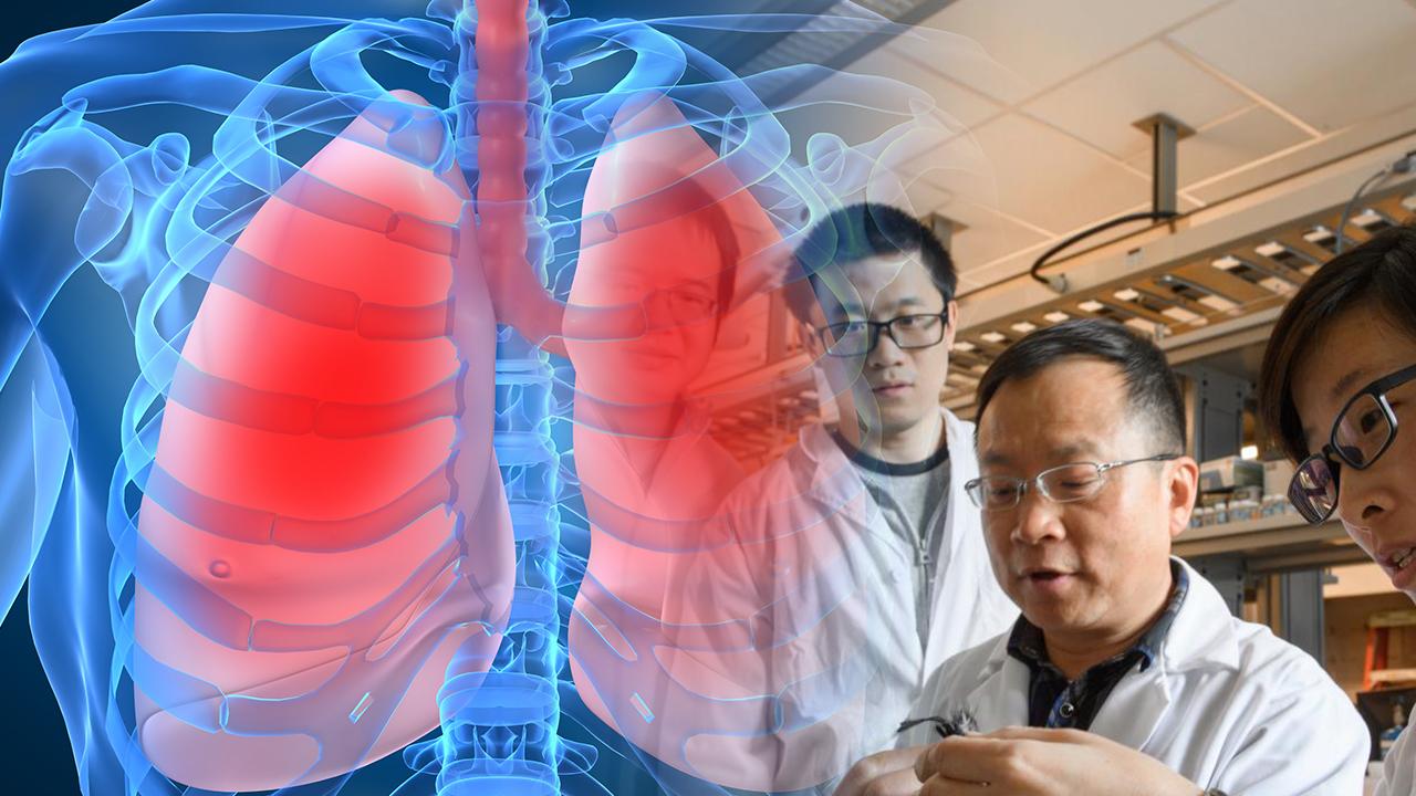 Japon bilim insanları mucizeye imza attı: İlk akciğer doku nakli