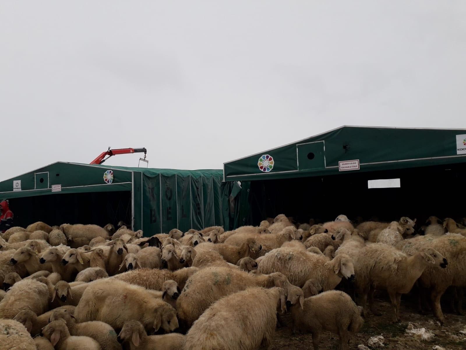 Koyunlarıyla birlikte yaylada mahsur kaldılar! Koyuncuların imdadına Kocasinan Belediyesi yetişti