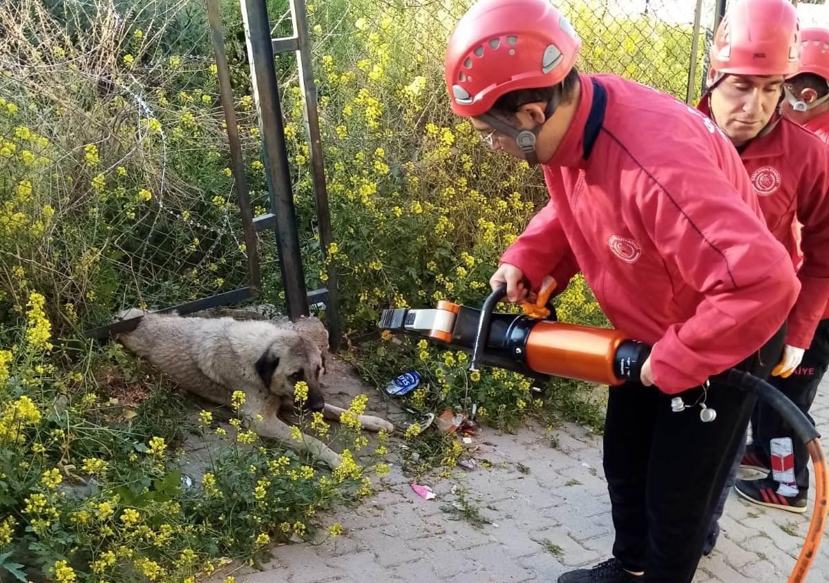 Demir korkuluk ile duvar arasına sıkışan köpeği itfaiye ekipleri kurtardı