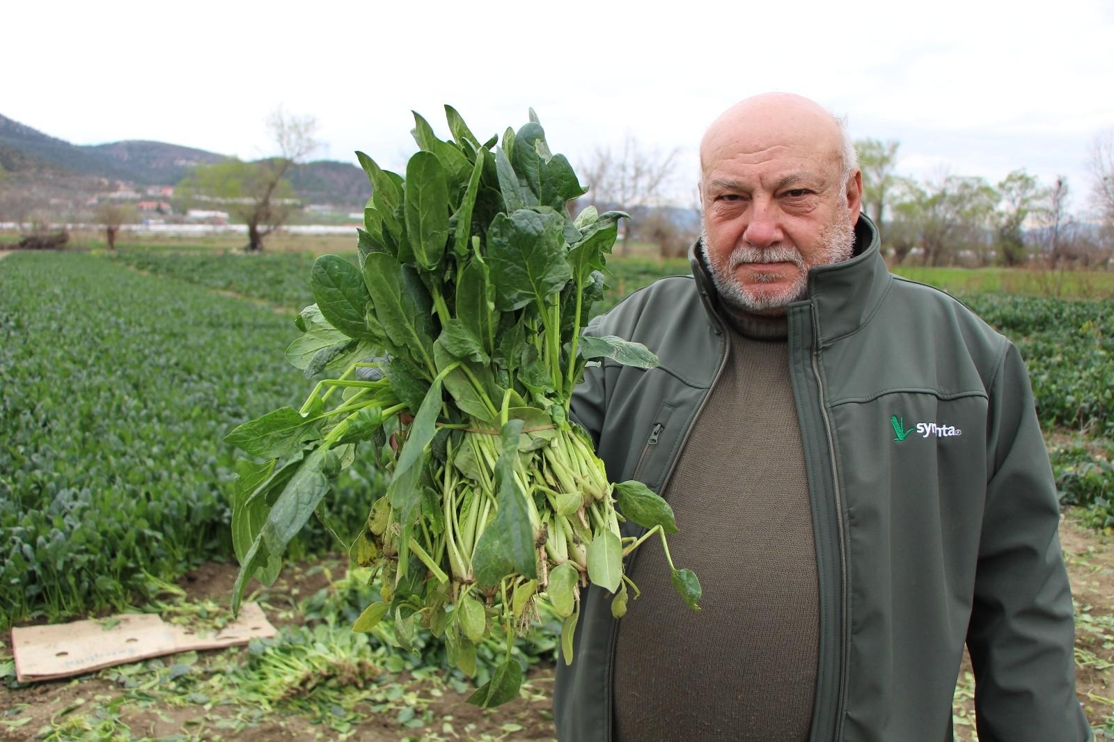 Ispanaklarını satamayan çiftçi ıspanakların TMO tarafından alınarak halka dağıtılmasını istiyor