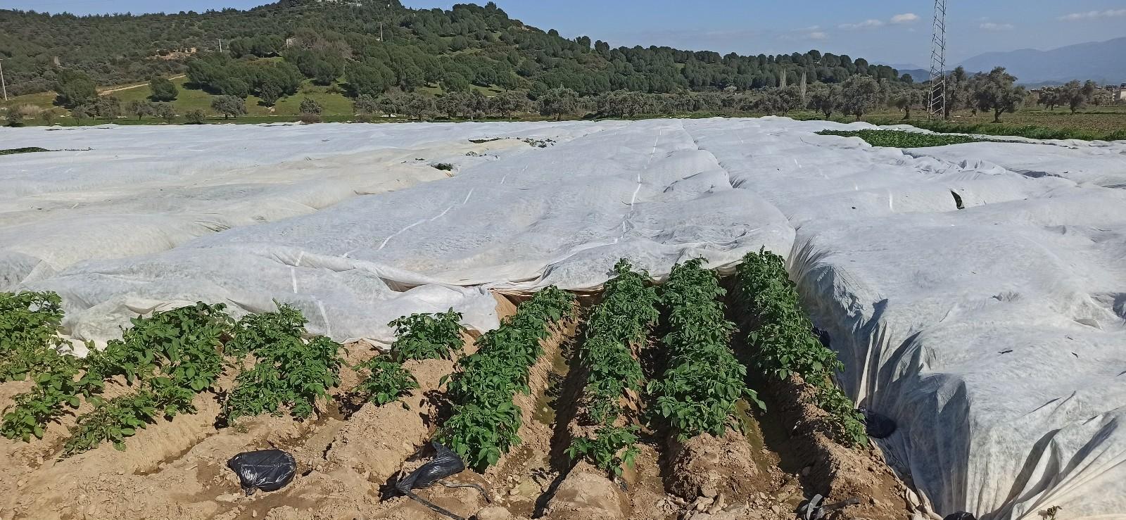 """Ziraat Odası Yönetim Kurulu Üyesi Şakir Balcılar: """"Alımlar patates üreticisine soluk aldıracak"""""""