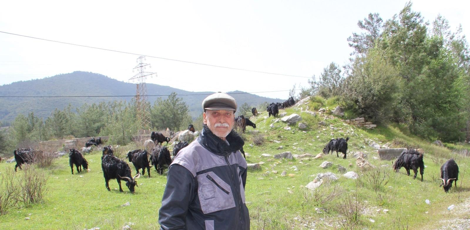 Muğla'da 73 yaşındaki amca çobanlara kız verilmediğinden şikayetçi