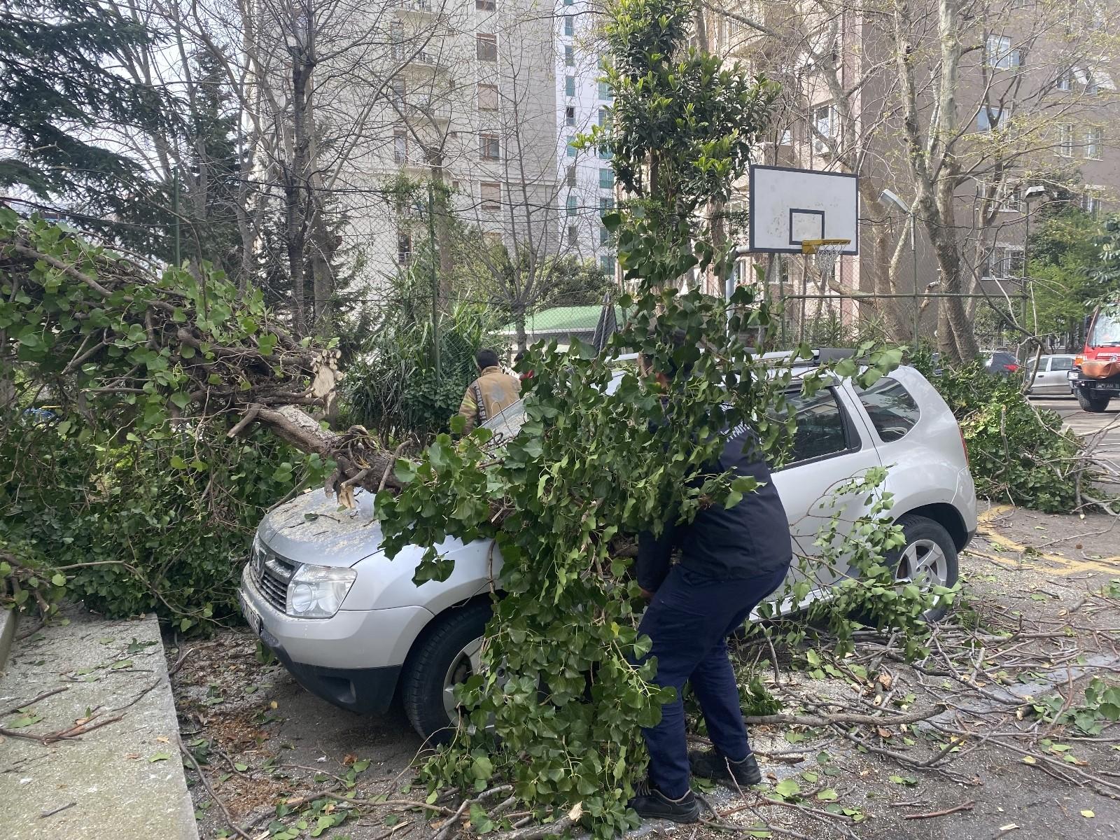 Kadıköy'de çıkan şiddetli rüzgar sonucu park halindeki otomobillerin üzerine ağaç devrildi