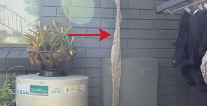 İnanılmaz olay! Kapının önünde 4 metre uzunluğunda yılan derisi bulundu!