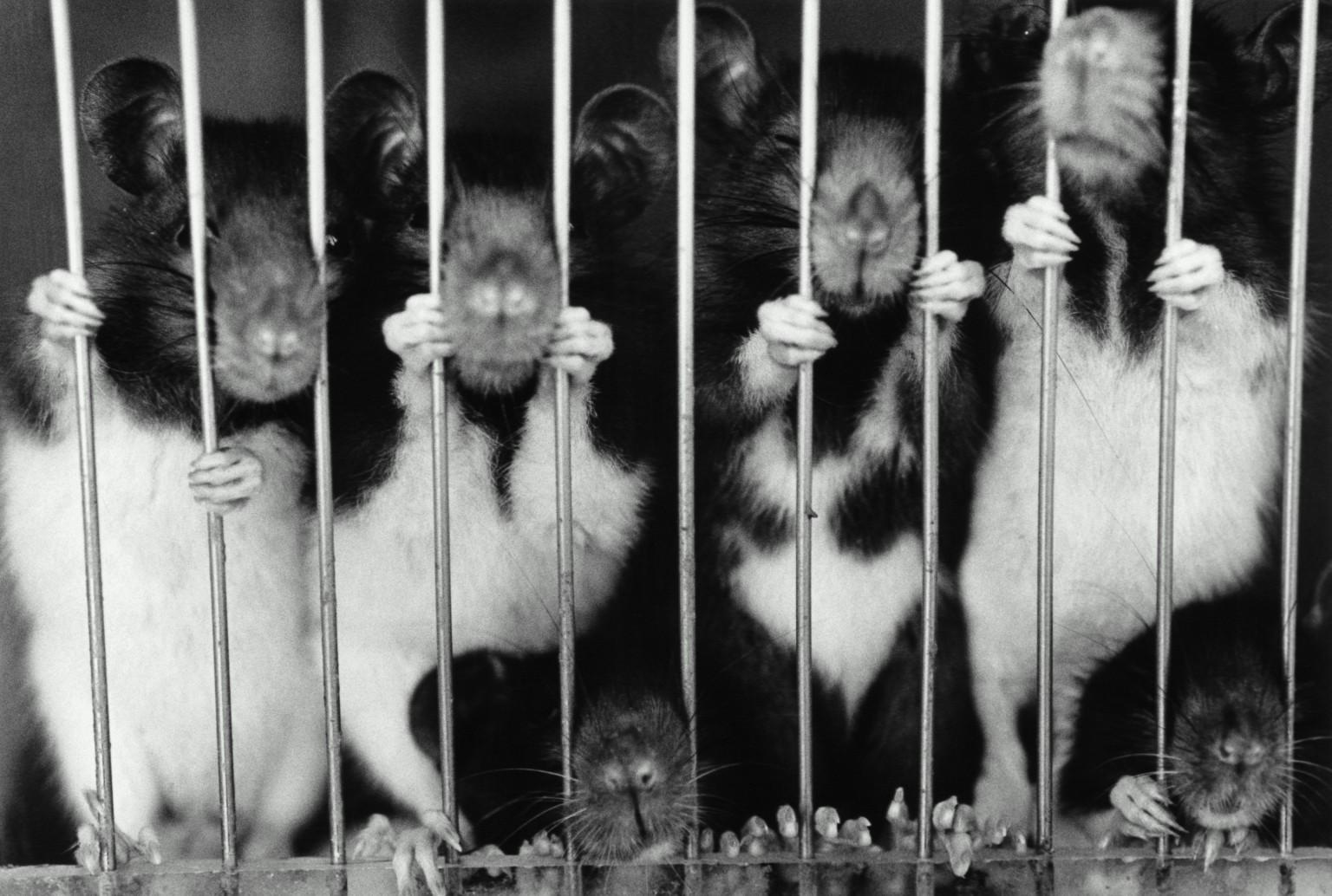 Hayvan deneyi yapan markalar 2021 | Hangi markalar hayvanlar üzerinde deney yapıyor?
