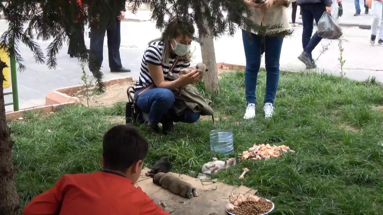 İnsanlık ölmemiş dedirten olay! Siirt'te caddede doğum yapan köpeğe vatandaşlar sahip çıktı