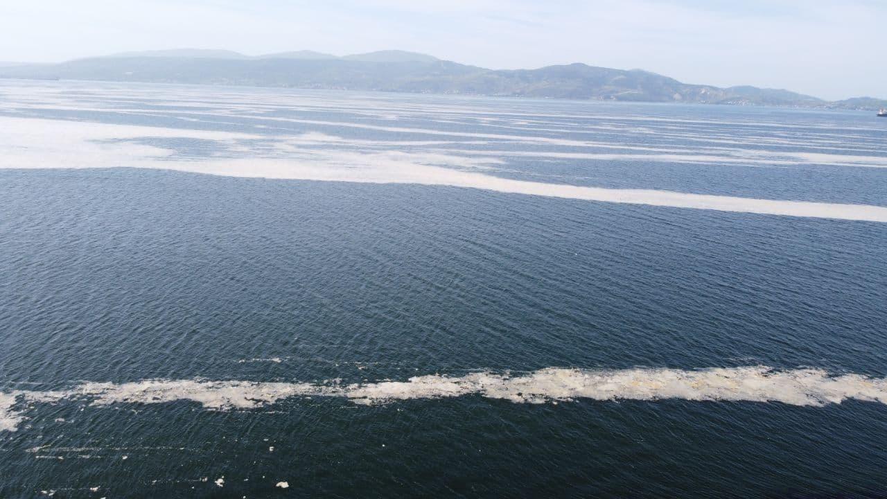 Deniz salyası için önlem alınmalı: Turizme darbe vurabilir!