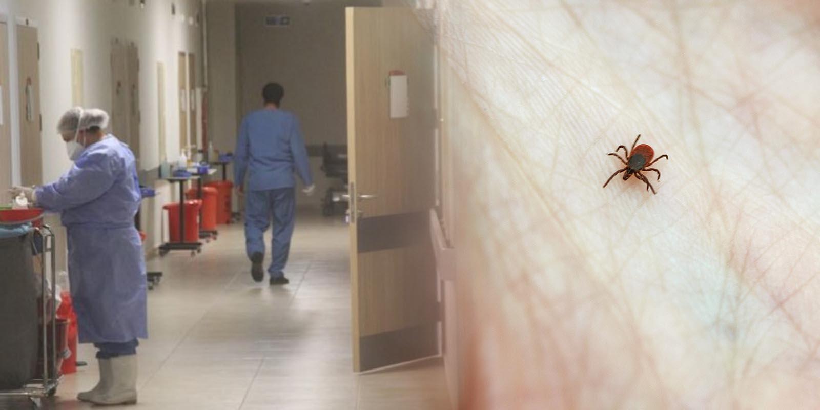 Kene kabusu geri mi dönüyor? Erzincan'da 7 kişi kene ısırması sonucu hastanelik oldu