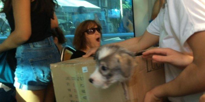 Tramvaydaki sevimli kaçak yolcu
