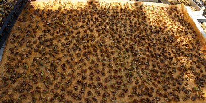 Aydın'da incir cipsi ilgi görüyor