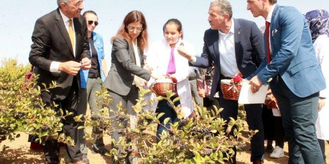 Kanser savaşçısı bitki artık Türkiye'de de üretiliyor