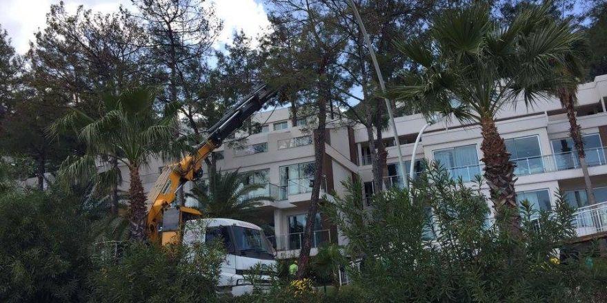 Çam ağaçlarının kuruma nedenini mahkeme tespit etti